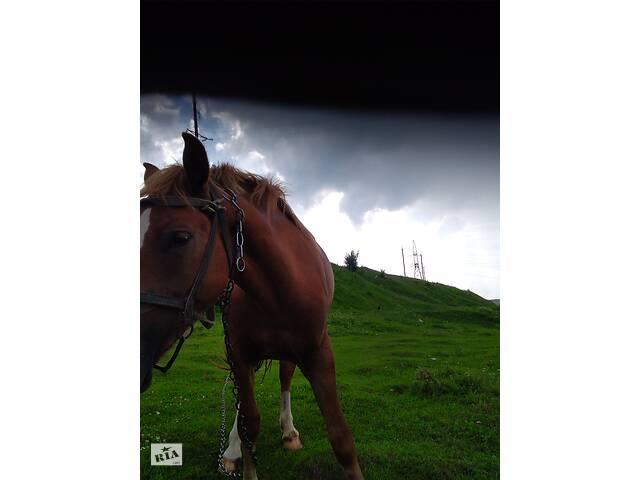 купить бу Продам лошадь,возраст 2 года в Подгайцах