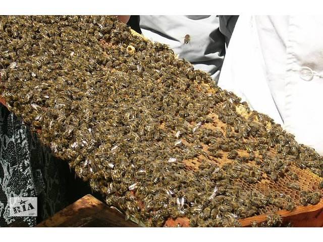 бу Продам пчелопакети, рои Украинской степной породы в Хмельницком