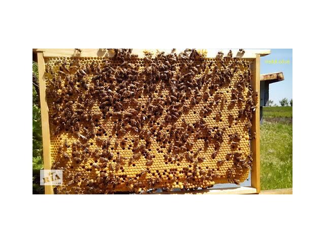 бу Продам сильні бджолосім'ї в Бахмуті (Артемівськ)