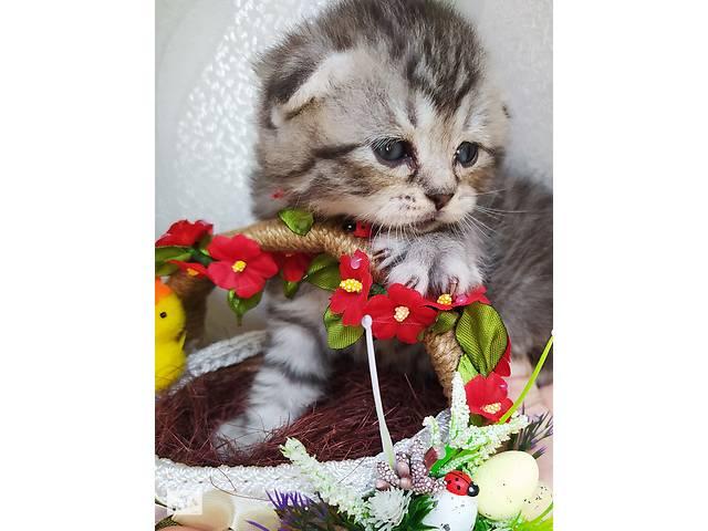 Продам вислоухих котят.- объявление о продаже  в Мариуполе