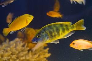 Рибки,рослиги,декор ддя акваріума