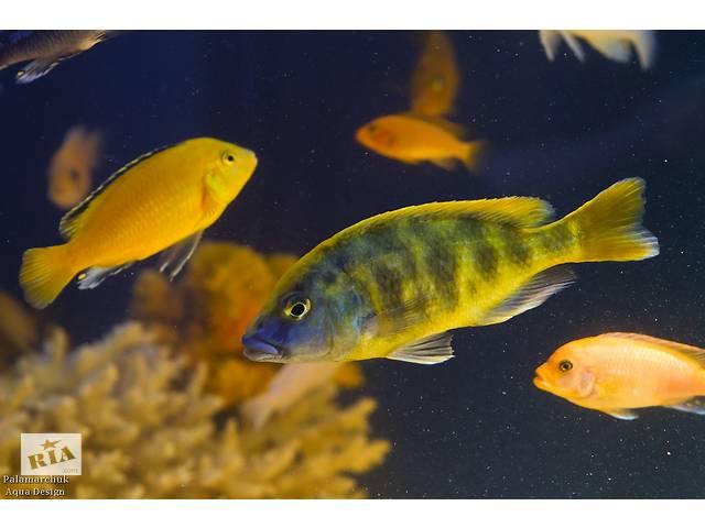купить бу Рибки,рослиги,декор ддя акваріума в Виннице