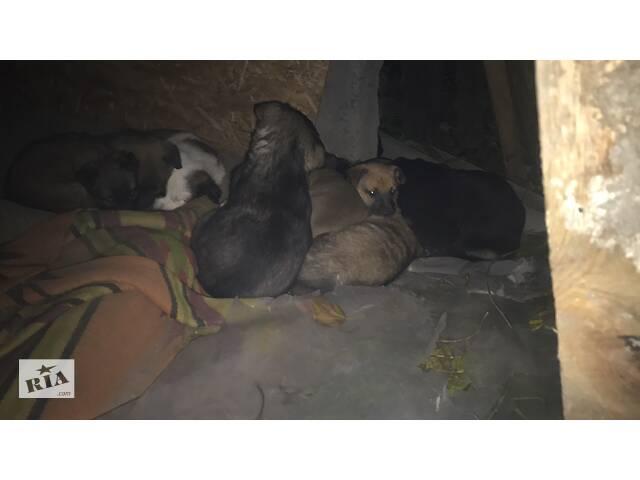 бу Милые щеночки Бесплатно  в Днепре (Днепропетровск)