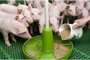Сухое молоко для поросят ЗЦМ для животных
