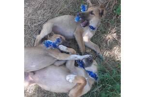 Украина.Одесса.Ищем дом 5 щенкам,4 мальчика и одна девочка, шикарные детки,  рост средний будет, им сейчас  2 месяца.