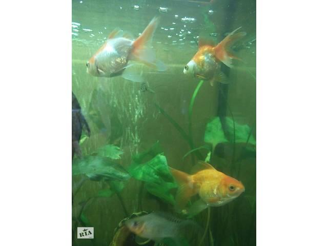 бу Золотые рыбки в Харькове