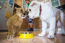Догляд за тваринами