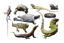Другие экзотические животные и рептилии