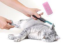 Інструменти і обладнання для грумінгу кішок