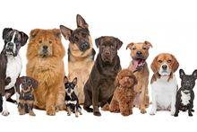 Собаки по типам