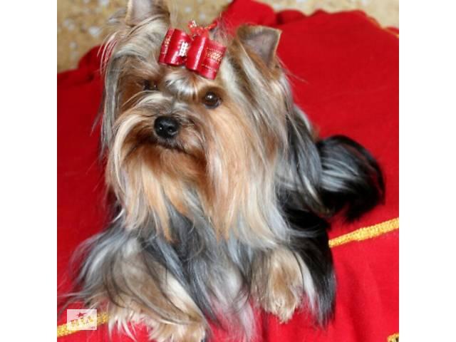 Стрижка собак мелких и средних пород в Минске- объявление о продаже