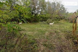 Куплю землю сельскохозяйственного назначения в Кельменцах без посредников