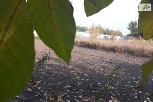 Куплю землю сельскохозяйственного назначения на Подгородном без посредников