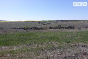 Здається в оренду земельна ділянка 50 соток у Миколаївській області